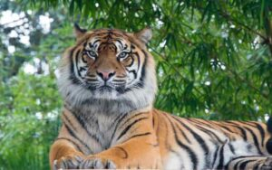 Manas National Park Tours